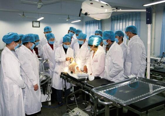 石家庄白求恩医学院招往届初中毕业生吗